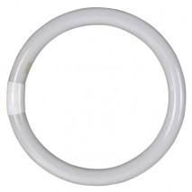 Tubo Circular T9 Tri-phosphor 32w G10q 6400k